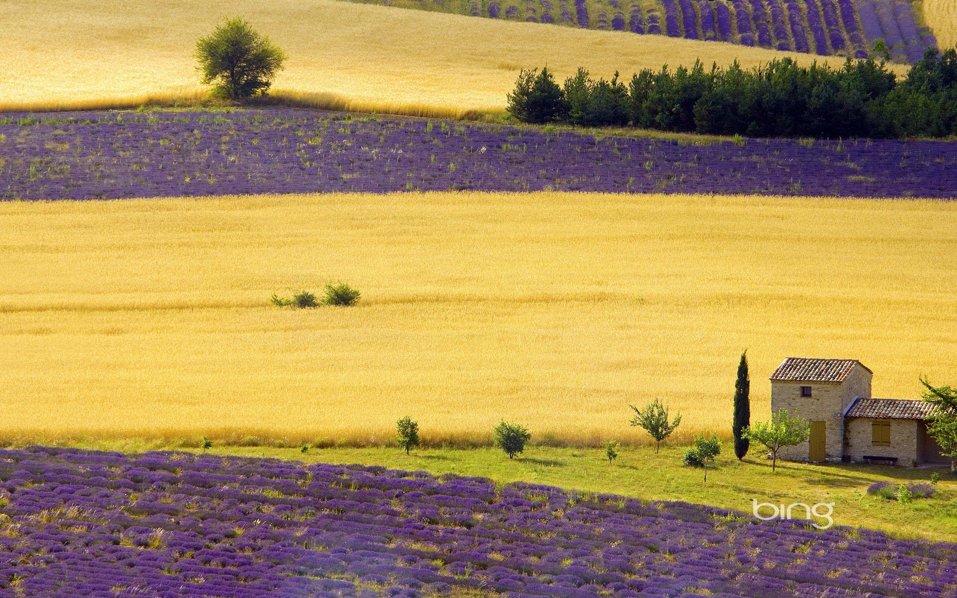 Bing background wallpaper Wallpapers   HD Wallpapers 84233 1920x1200