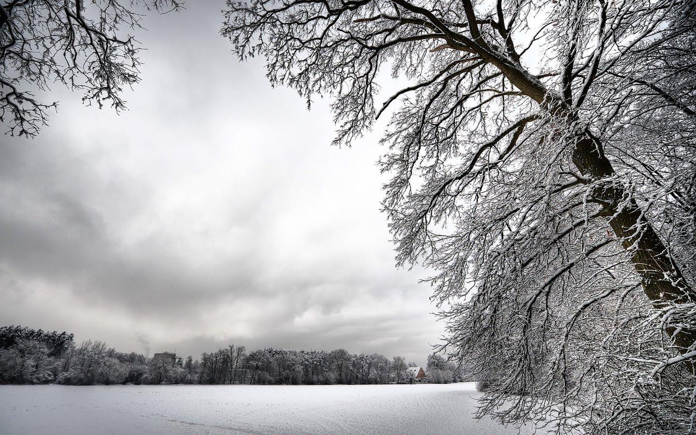 Snow Tree wallpapers   Snow Tree wallpapers 1440x900