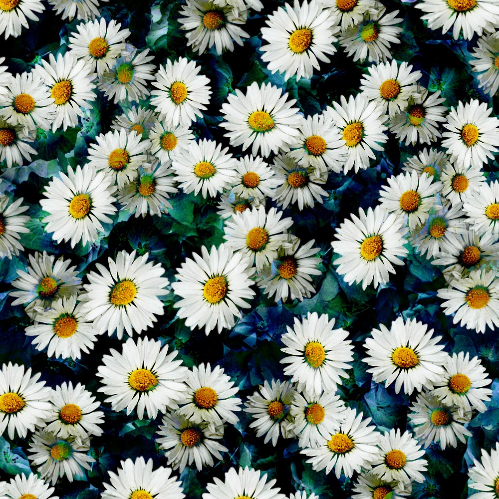 Daisies Tumblr Background Daisies seem to be popping up 1000x1000