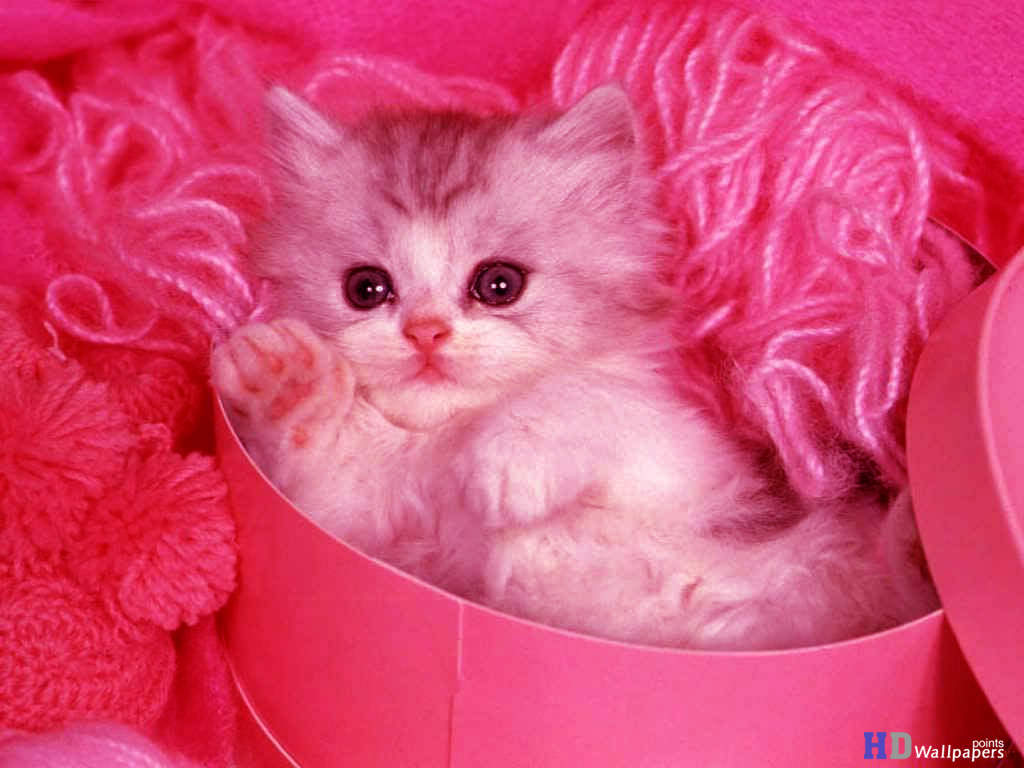 Cute Kittens Animal Wallpaper HD Wallpaper 1024x768