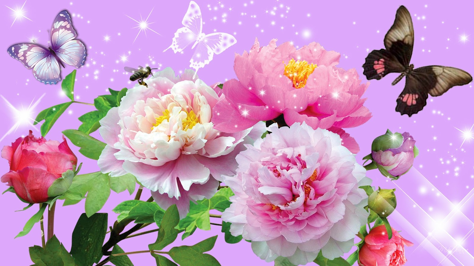 Collection of different beautiful flower with butterfly 1600x900