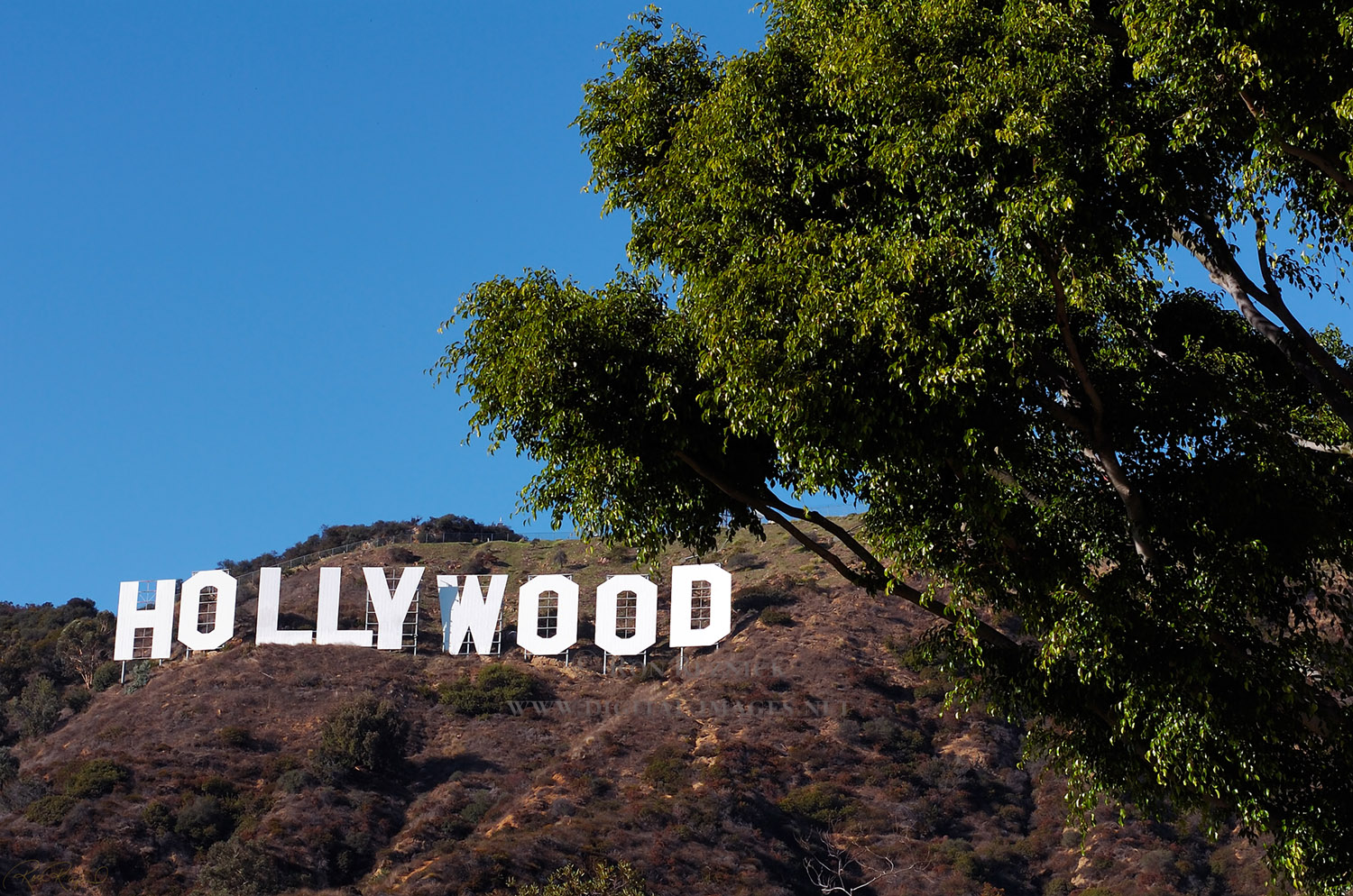 nature wallpapers background hollywood bollywood 1500x994