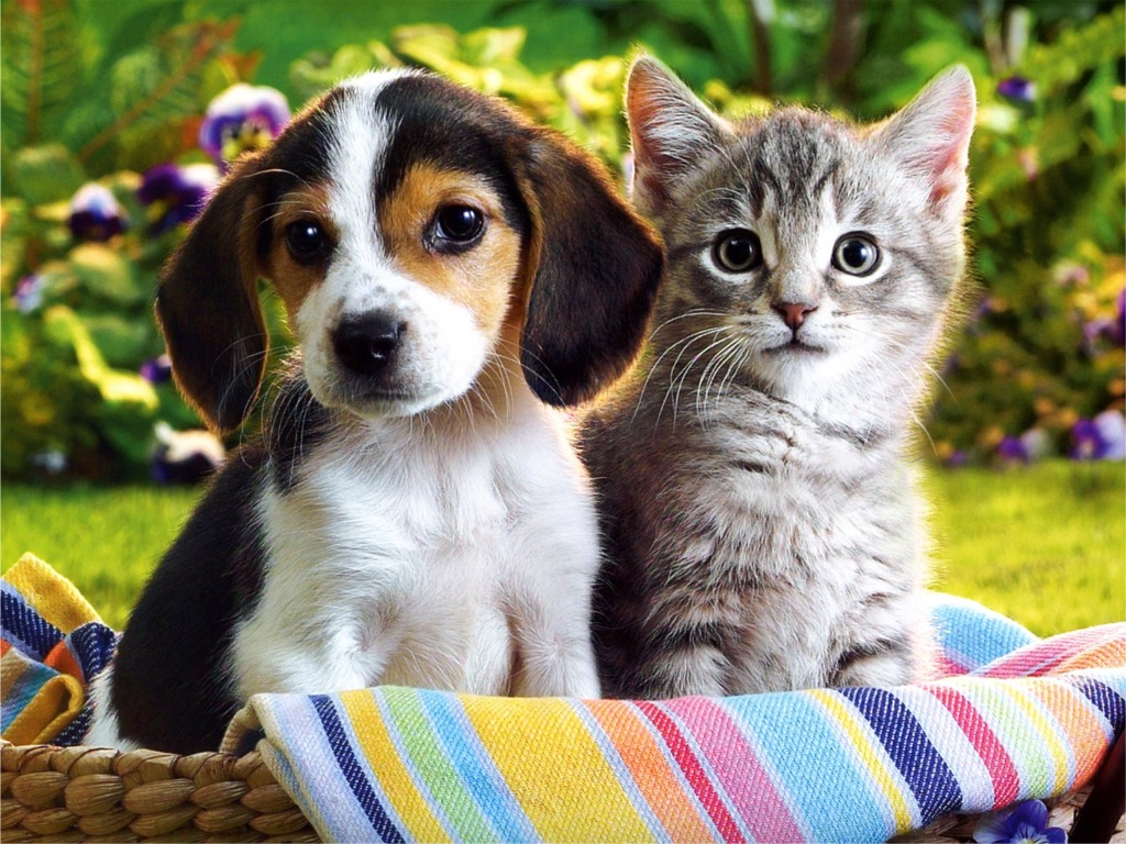 Beautiful Flower Wallpapers For You Kitten Puppy Wallpaper 1024x768