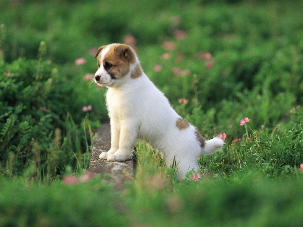 Cute Puppy Pictures Wallpapers 1024x768
