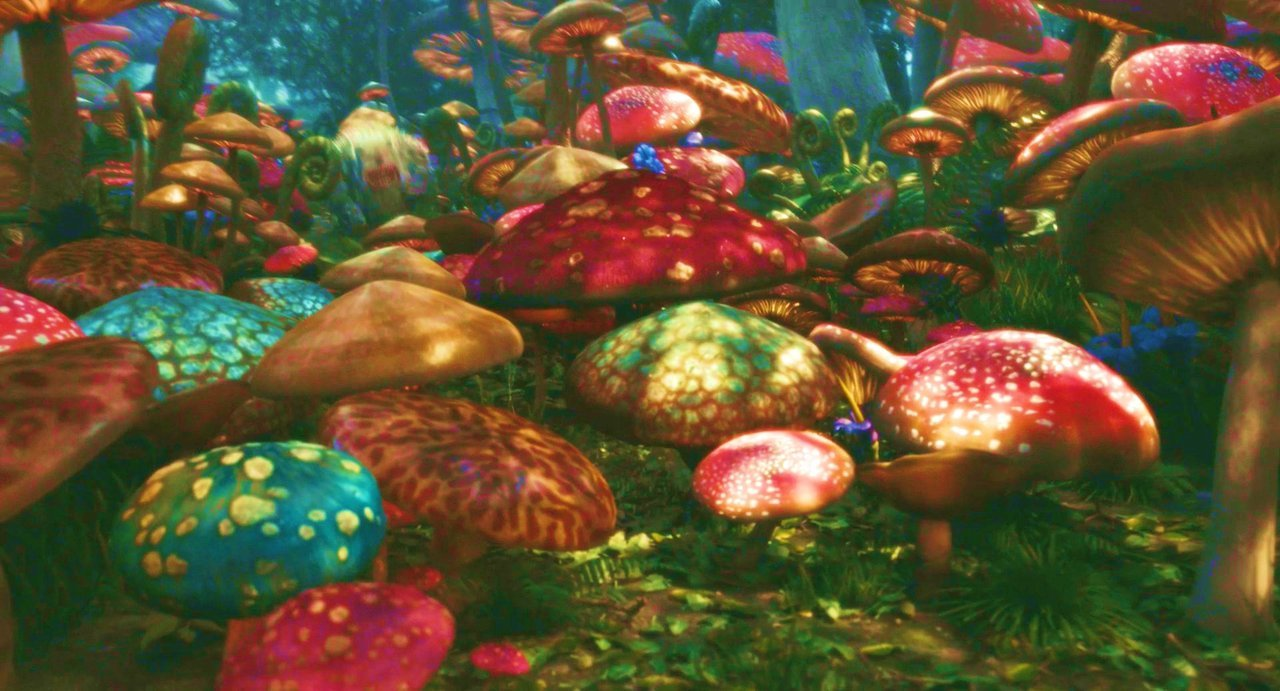 Free Download Go Back Images For Mushrooms Trippy Wallpaper