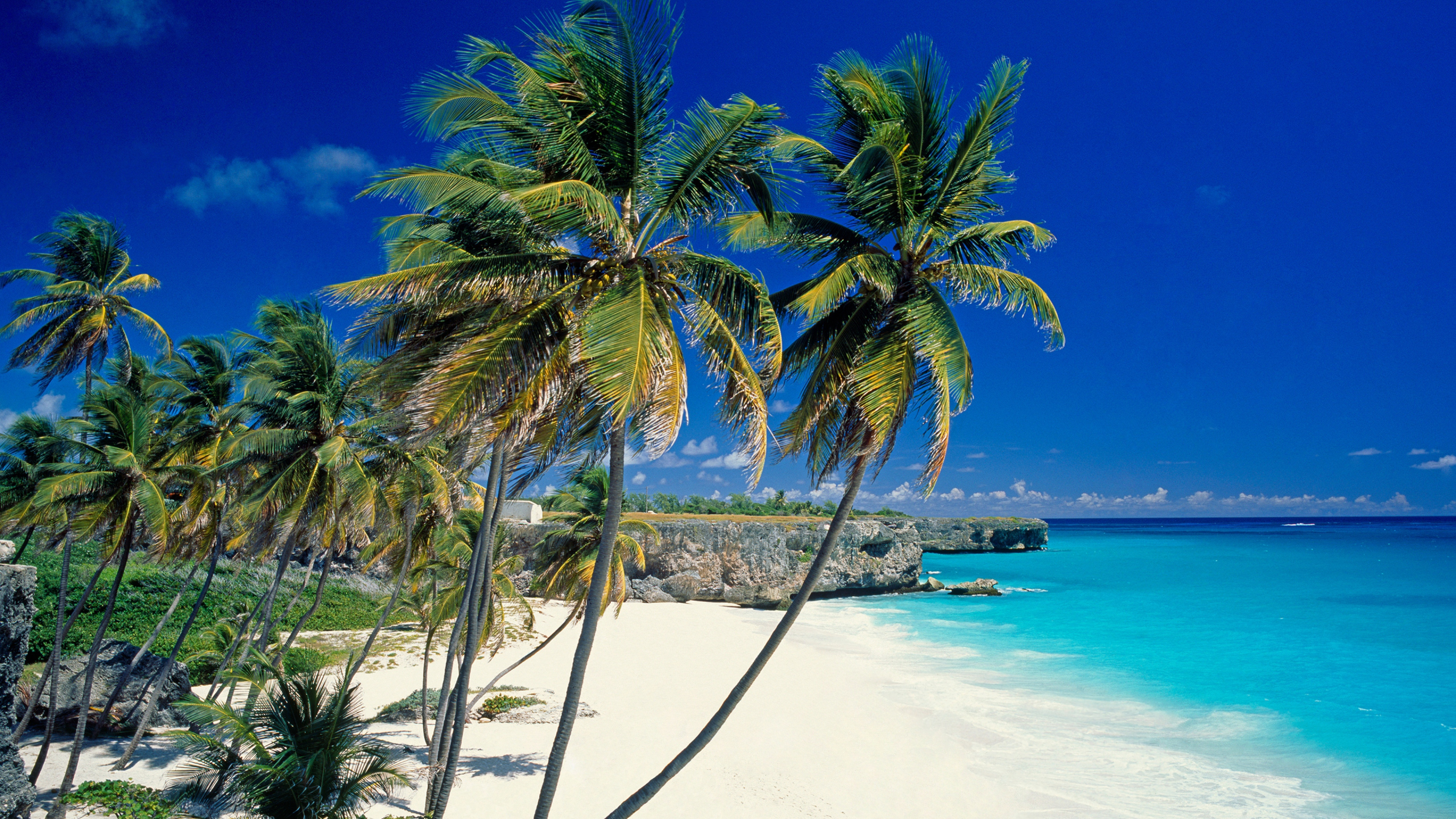 Wallpaper 3840x2160 beach tropics sea sand palm trees beautiful 3840x2160