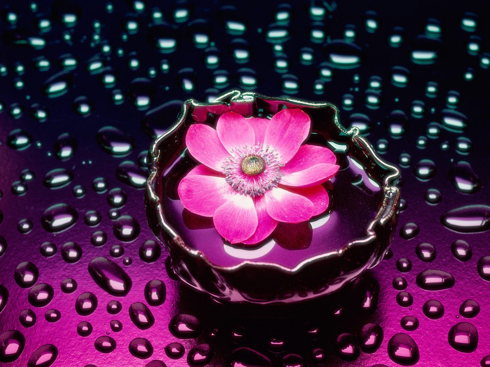 3D Pink Flower Wallpaper HD wallpapers   3D Pink Flower Wallpaper 1600x1200