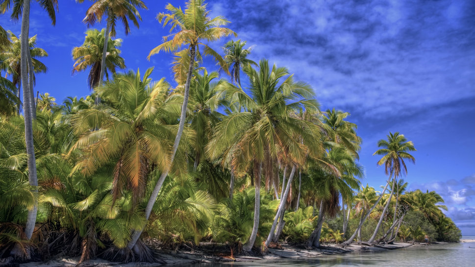 Beautiful Beach Backgrounds Palm Trees Great Palm Trees Beach Hdr 969x545