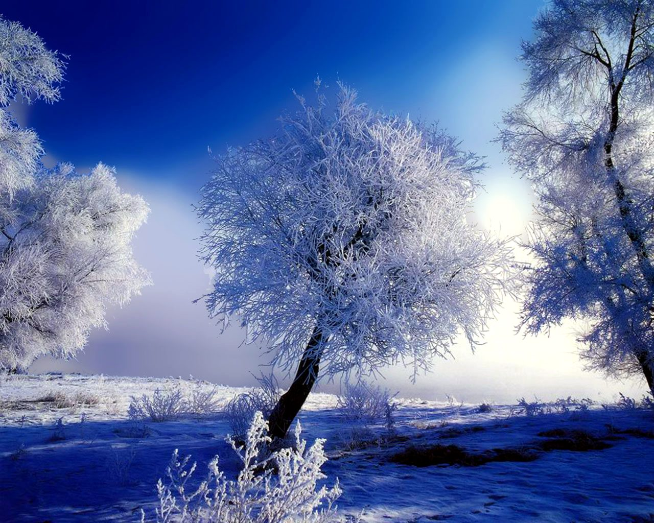 Winter images Wonderful Winter wallpaper photos 27867218 1280x1024