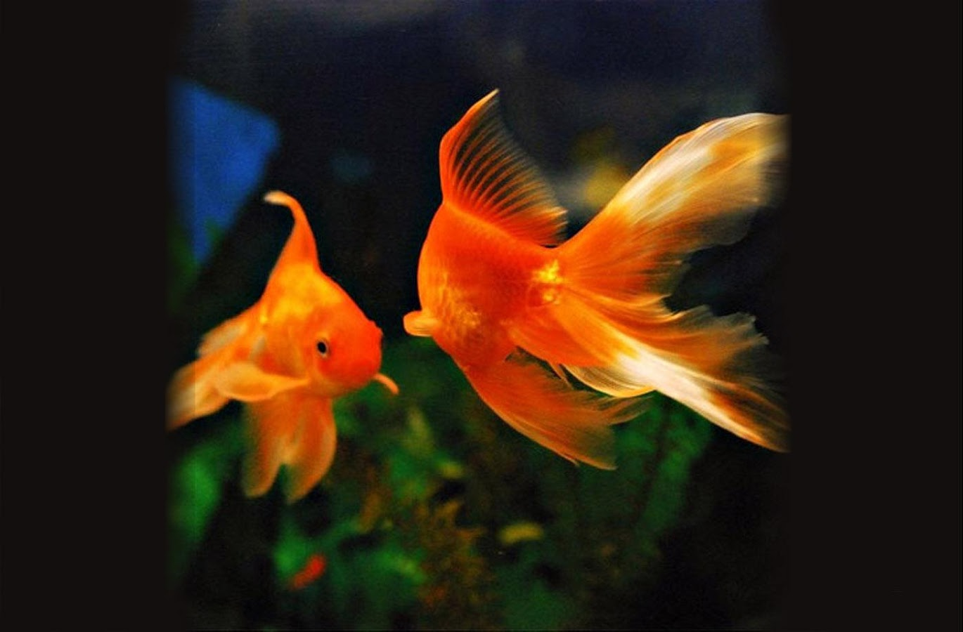 Aquarium Fish live wallpaper   screenshot 1370x900