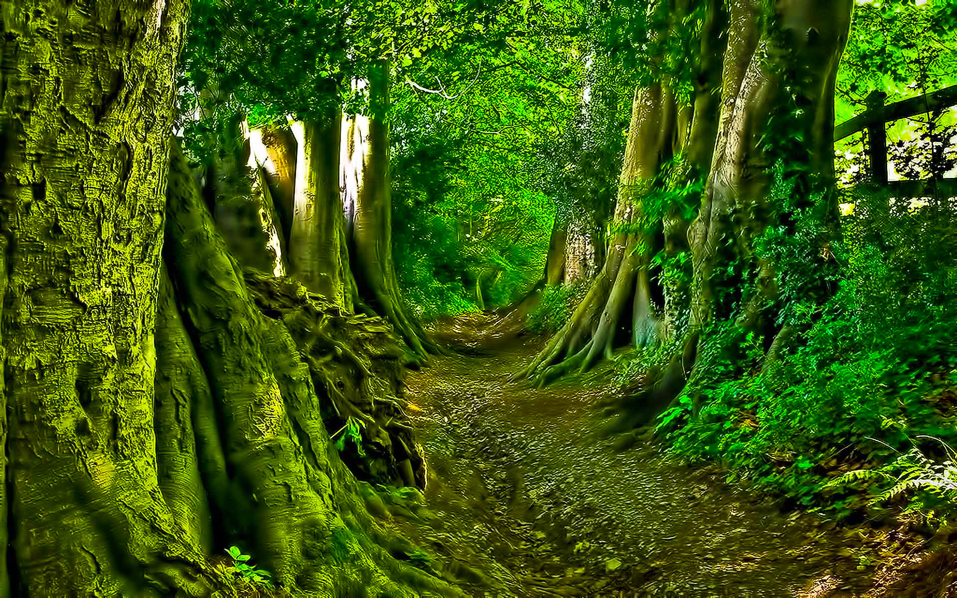 Green Forest Path Wallpaper   DreamLoveWallpapers 1920x1200