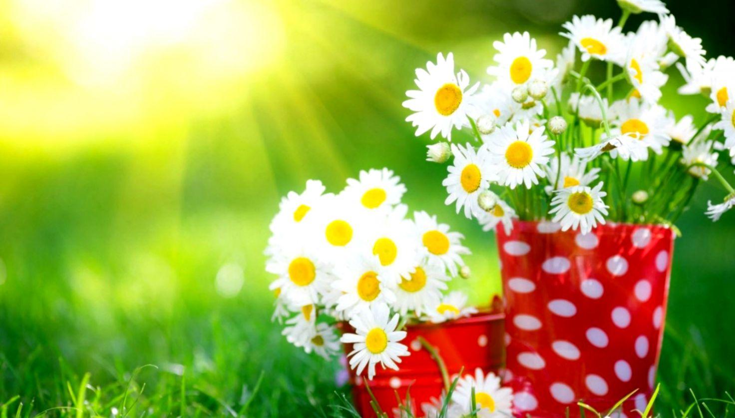 Beautiful Flowers Desktop Background sudingfamily 1472x837