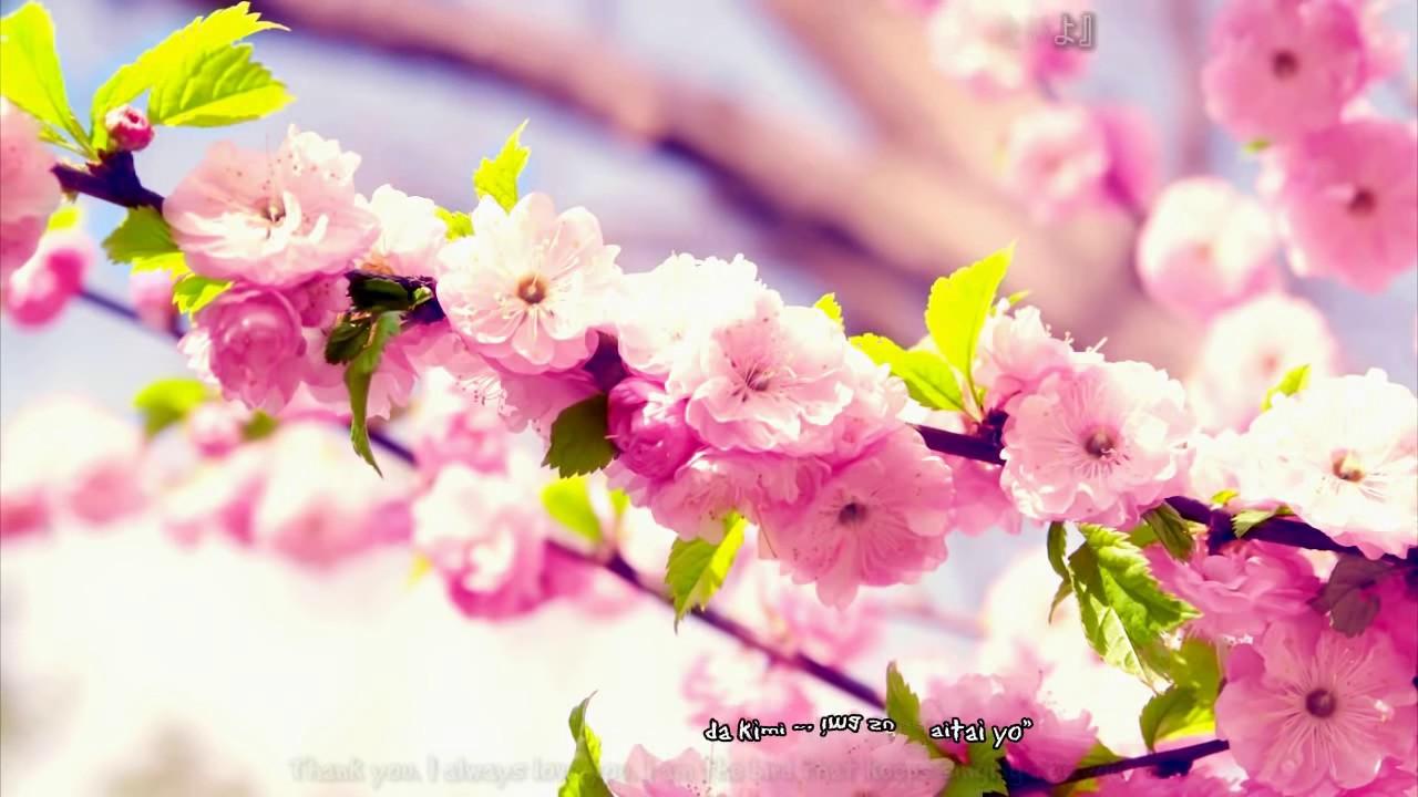 Sakura Anata Ni Deaete Yokatta   Full version Engsub Kara 1280x720
