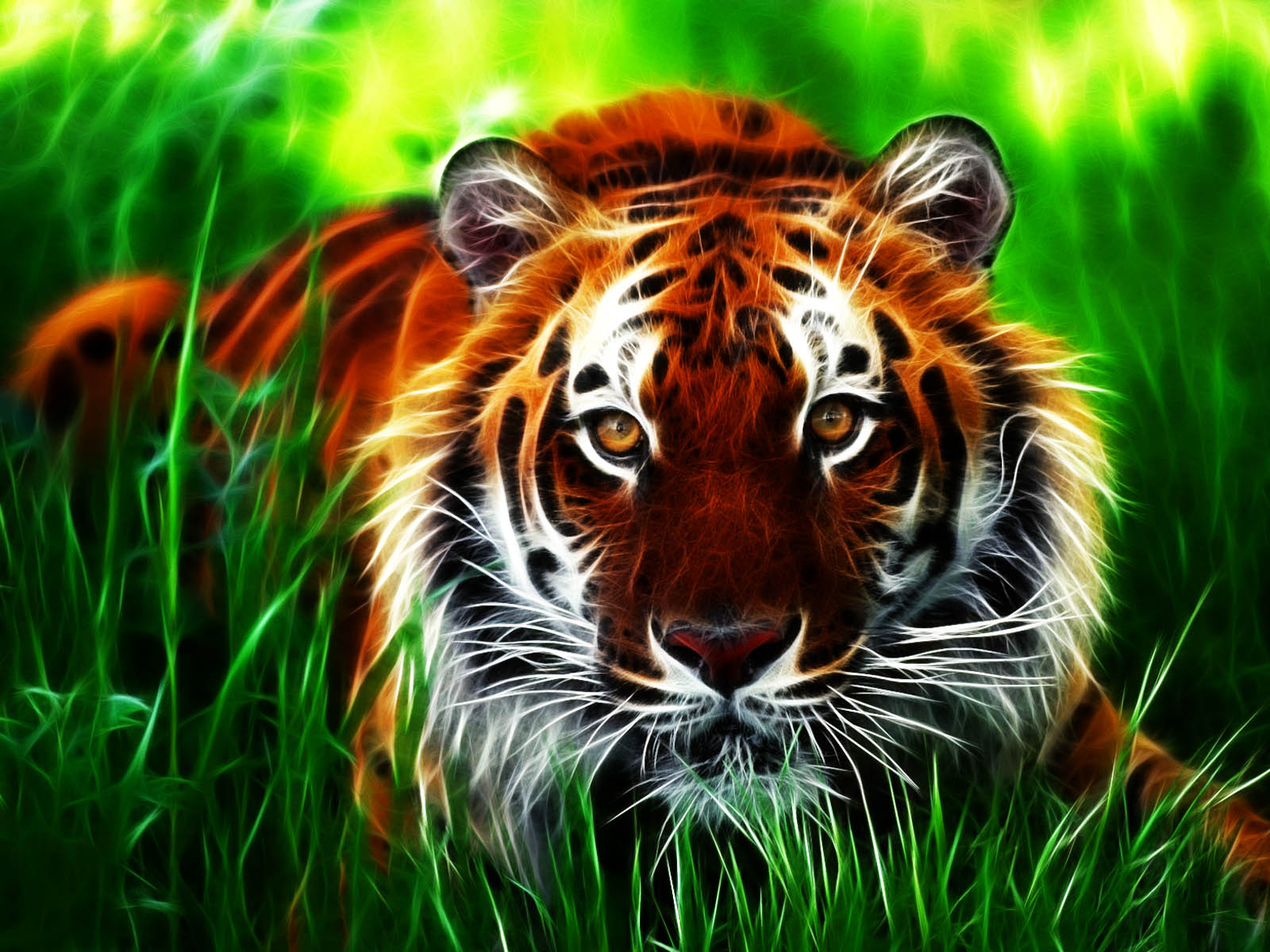 Tiger 3D Wallpapers Images Paos Pictures and Backgrounds for 1600x1200