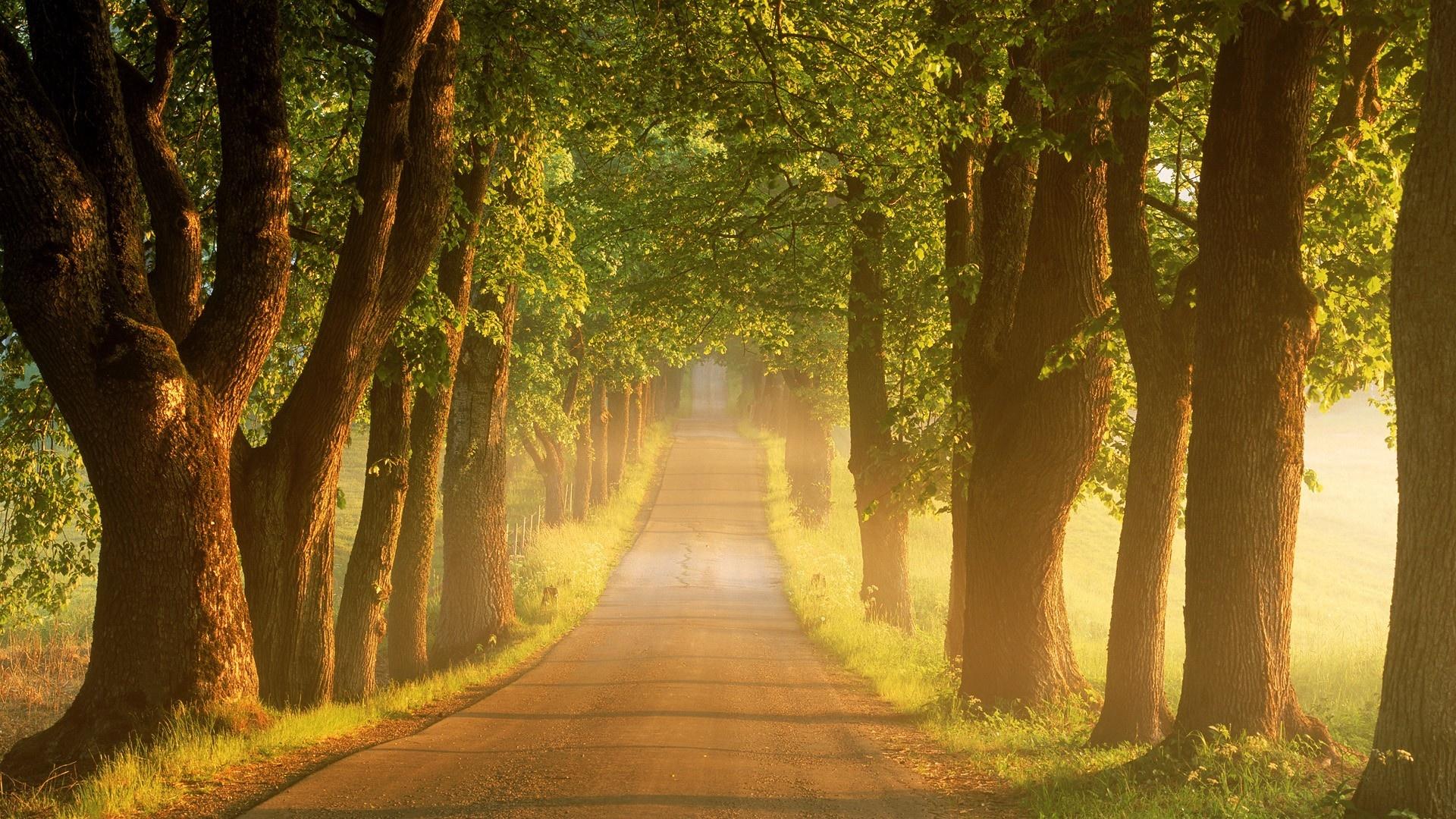 дерево дорога tree road  № 2404888 без смс