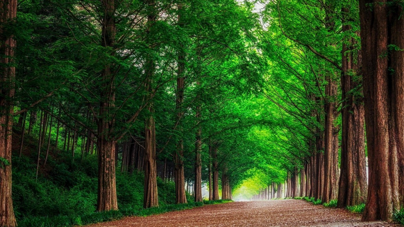 HD Background Green Forest Trees Straight Road Wallpaper 1366x768