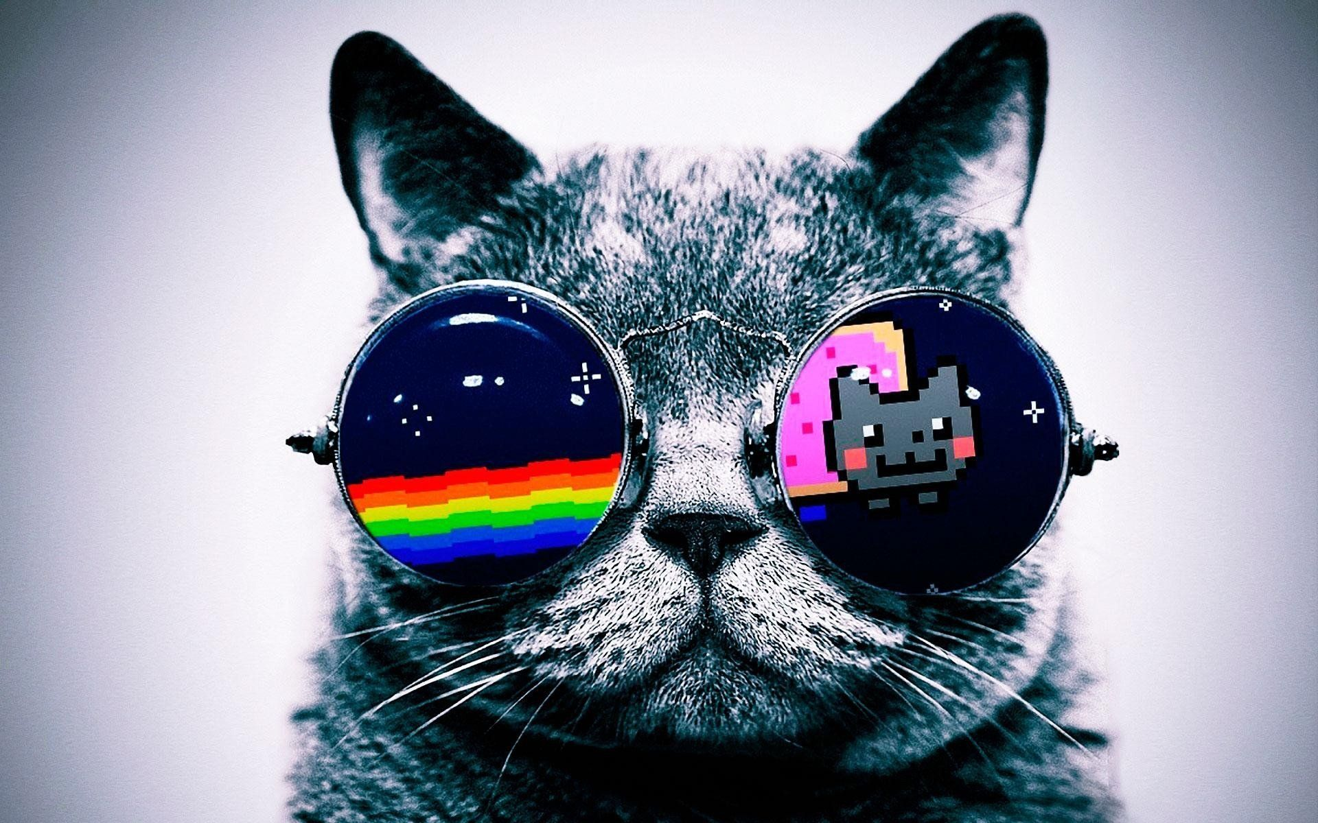 Hipster Cat Wallpapers   Top Hipster Cat Backgrounds 1920x1200