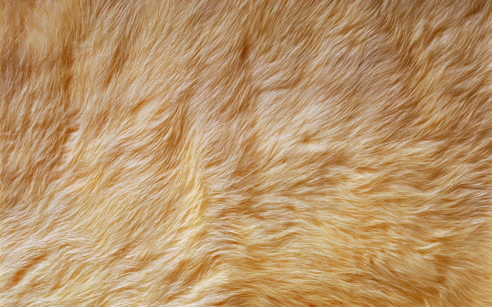 Free Fur Wallpaper For Bedrooms Beautiful Desktop