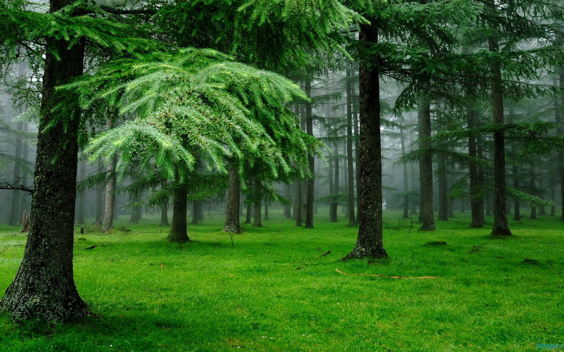 Download Nature Green Wallpaper pictures in high definition or 1920x1200
