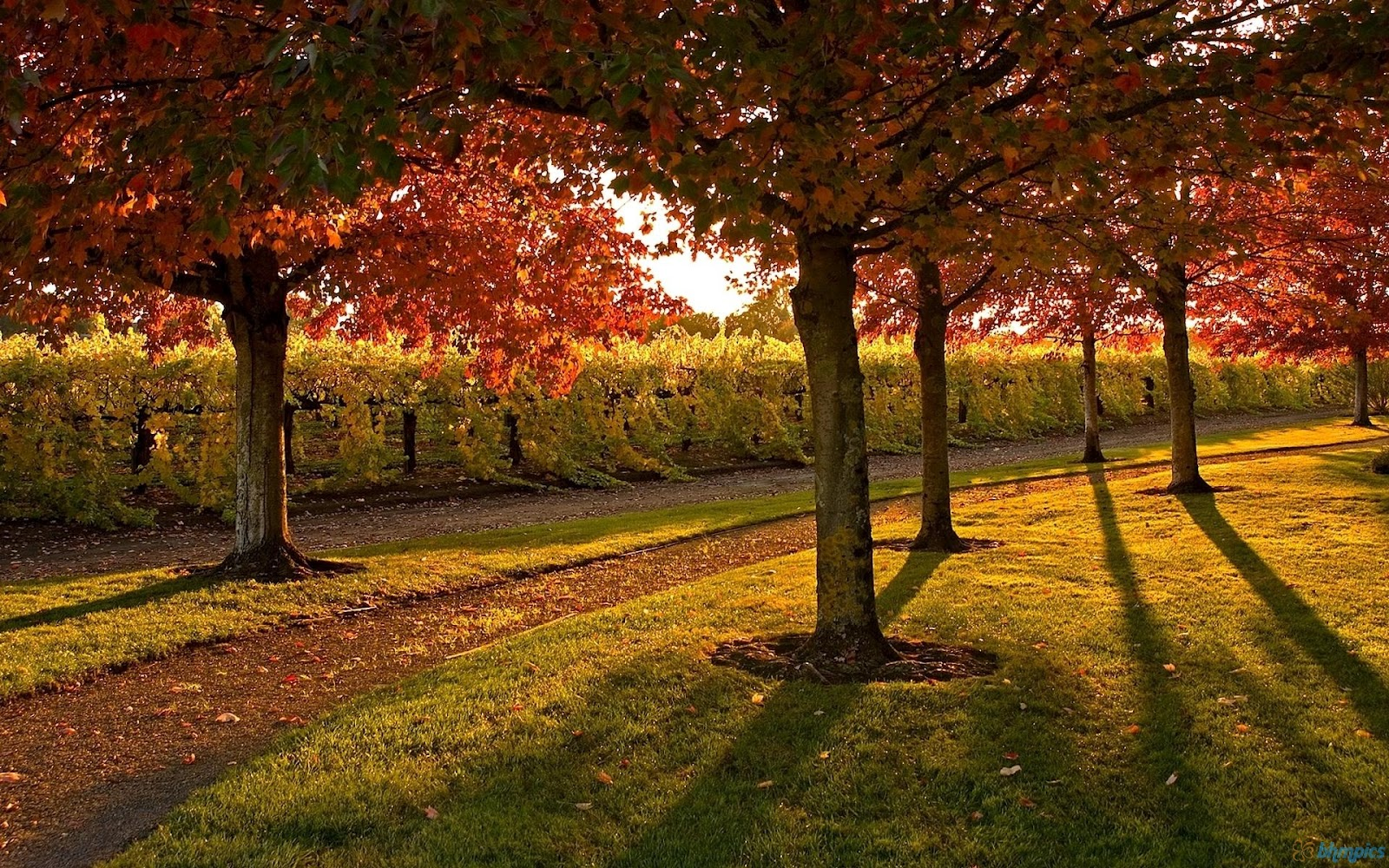 Scenic Wallpaper Autumn Scenic Wallpaper download for Desktop 1600x1000