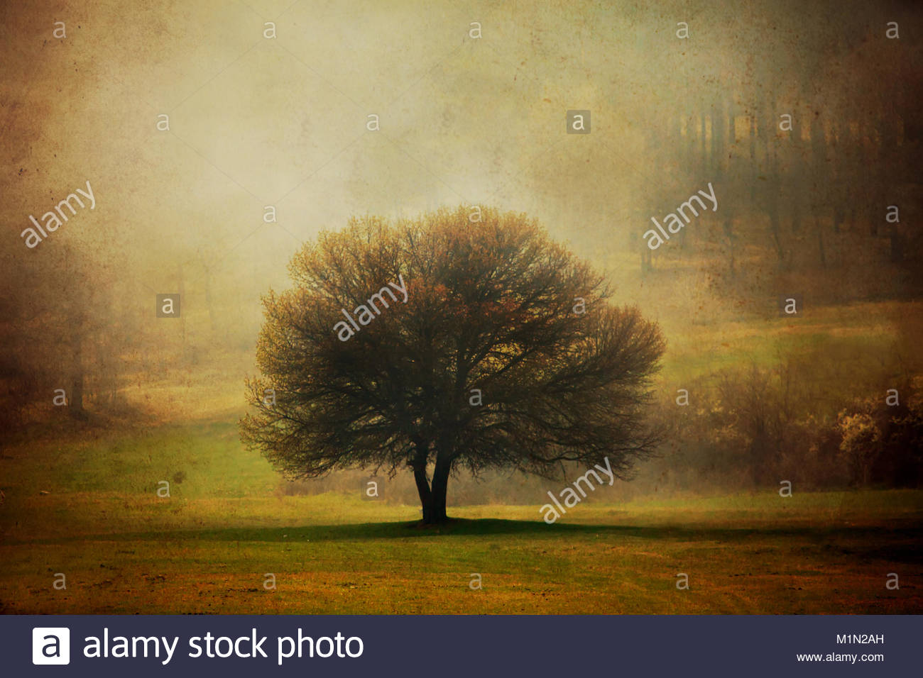 grunge background with one tree in pastoral autumn meadows Stock 1300x956