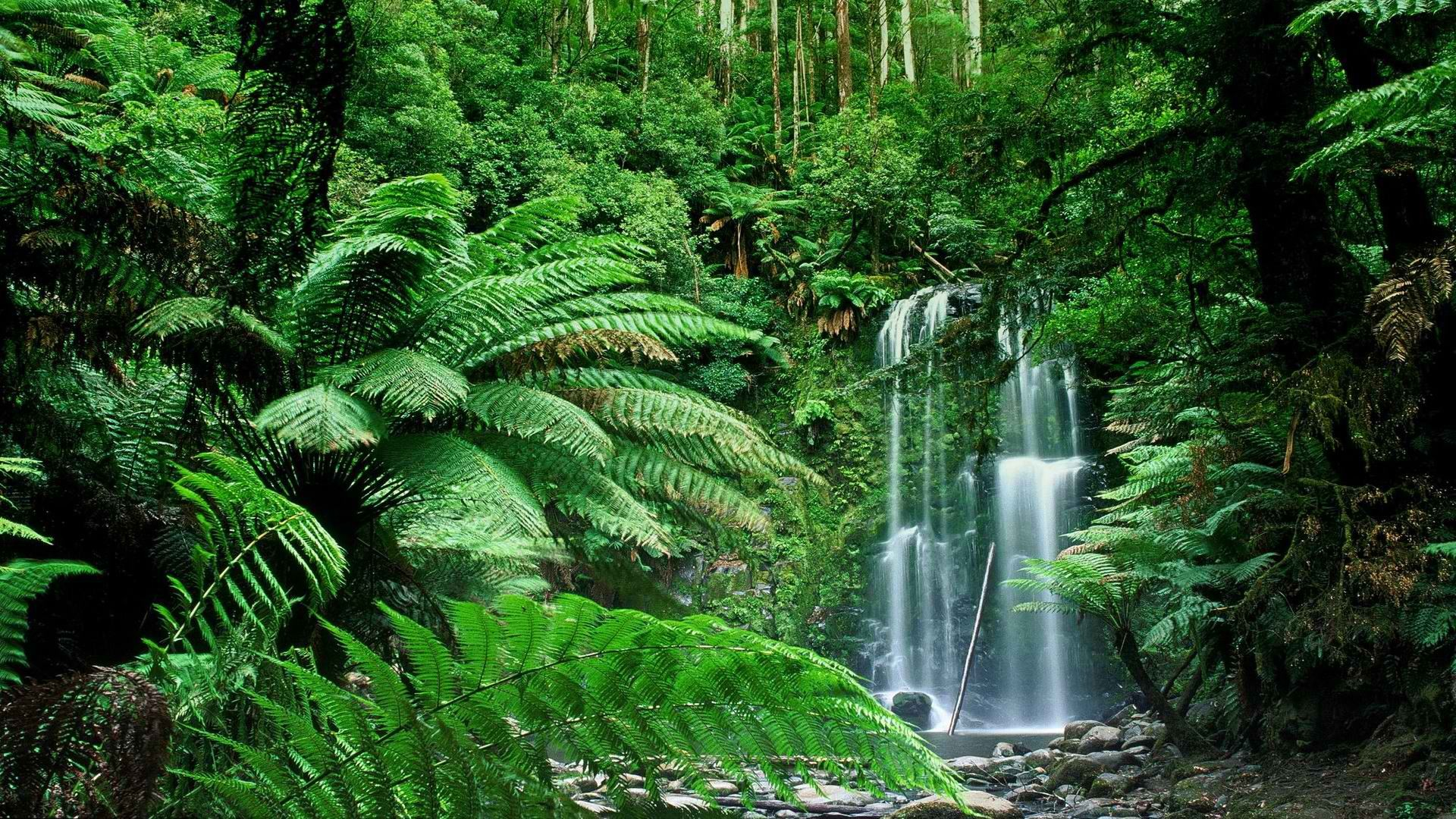 Nature Forest Wallpaper 1920x1080 Nature, Forest, Australia ...