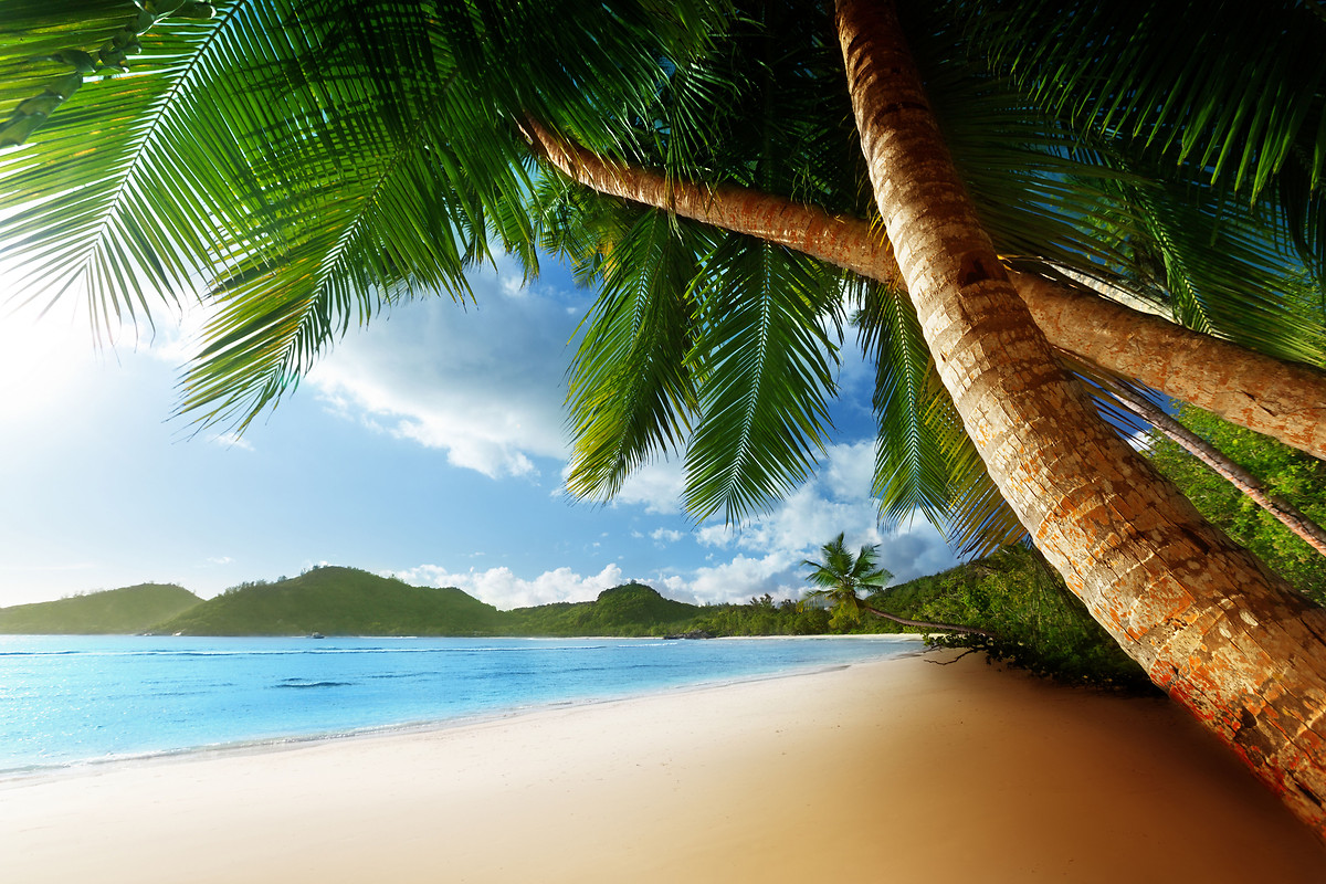 Caribbean Beach Wallpaper download   Download Caribbean 1200x800