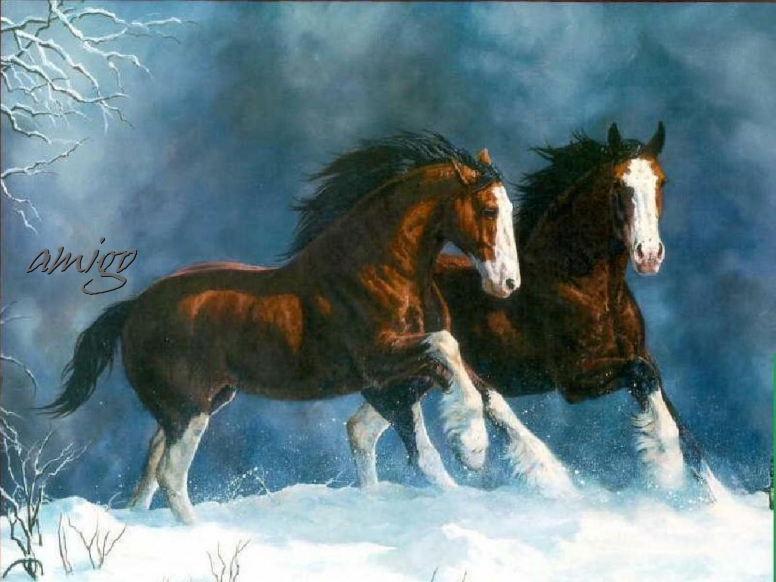 Wallpapers Paarden Wallpapers 1600x1200