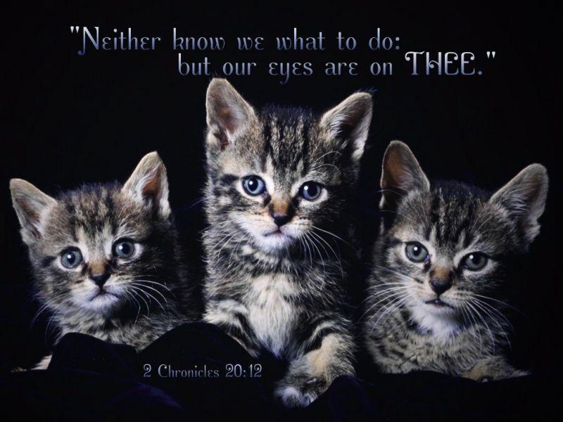 scripture wallpaper with cat pictures wallpapersafari