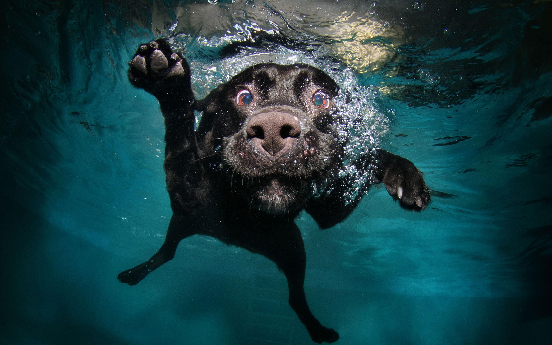 Amazing Underwater Dog HD Wallpaper 2880x1800