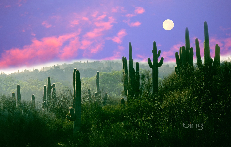 Wallpaper the moon desert AZ USA Saguaro cactus night Sonora 1332x850