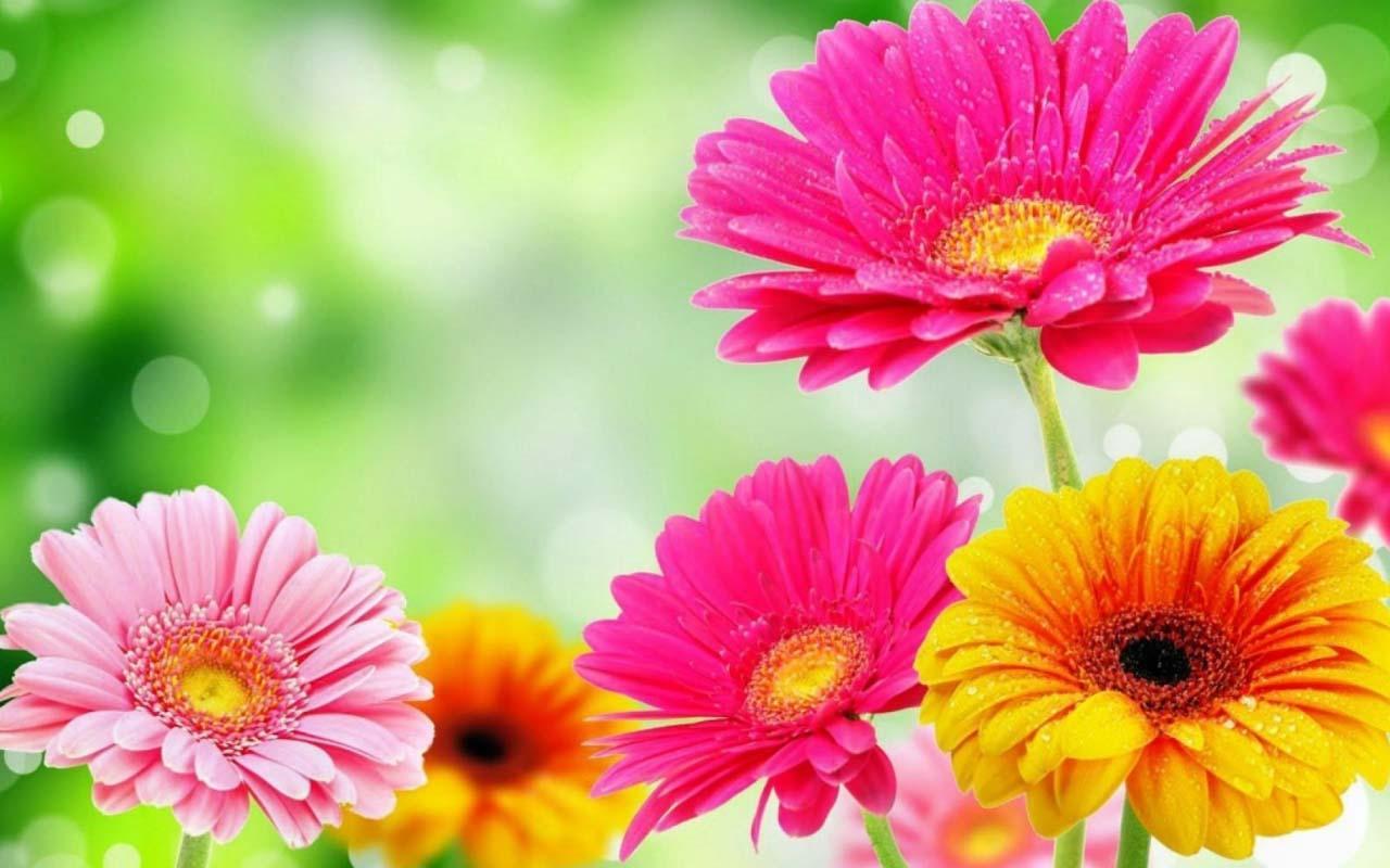 3D Spring Flower   screenshot 1280x800