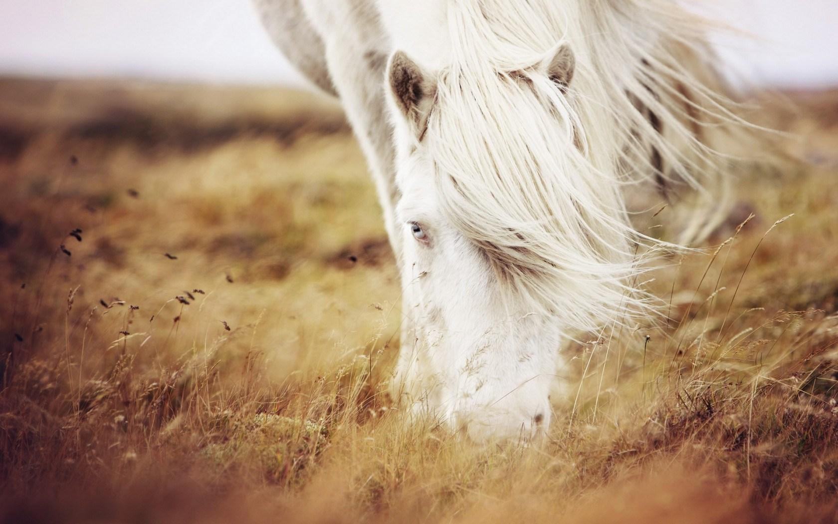 nature field summer grass white horse photo image hd 1680x1050
