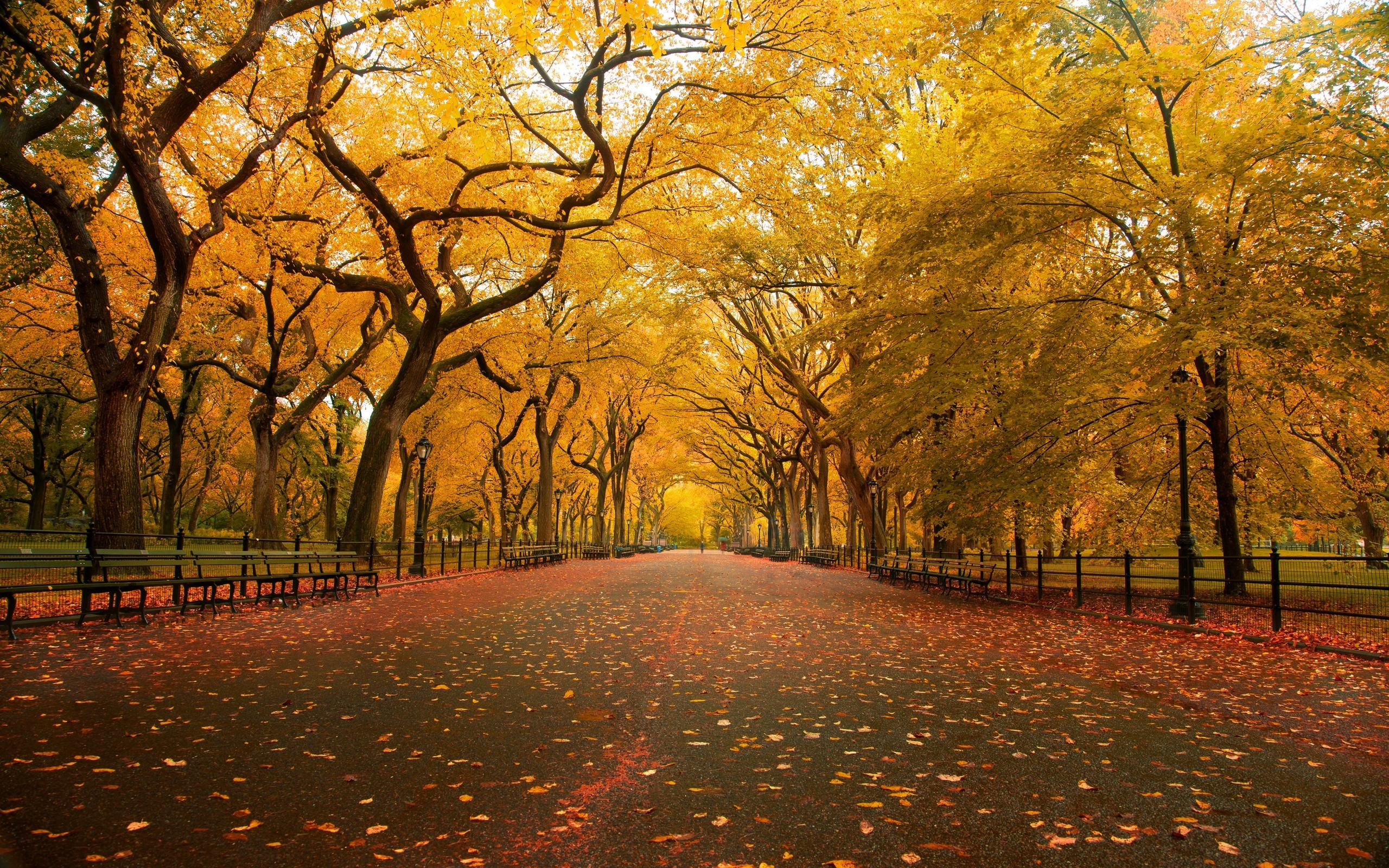 Central Park the mall fall wallpaper 2560x1600 3527 WallpaperUP 2560x1600