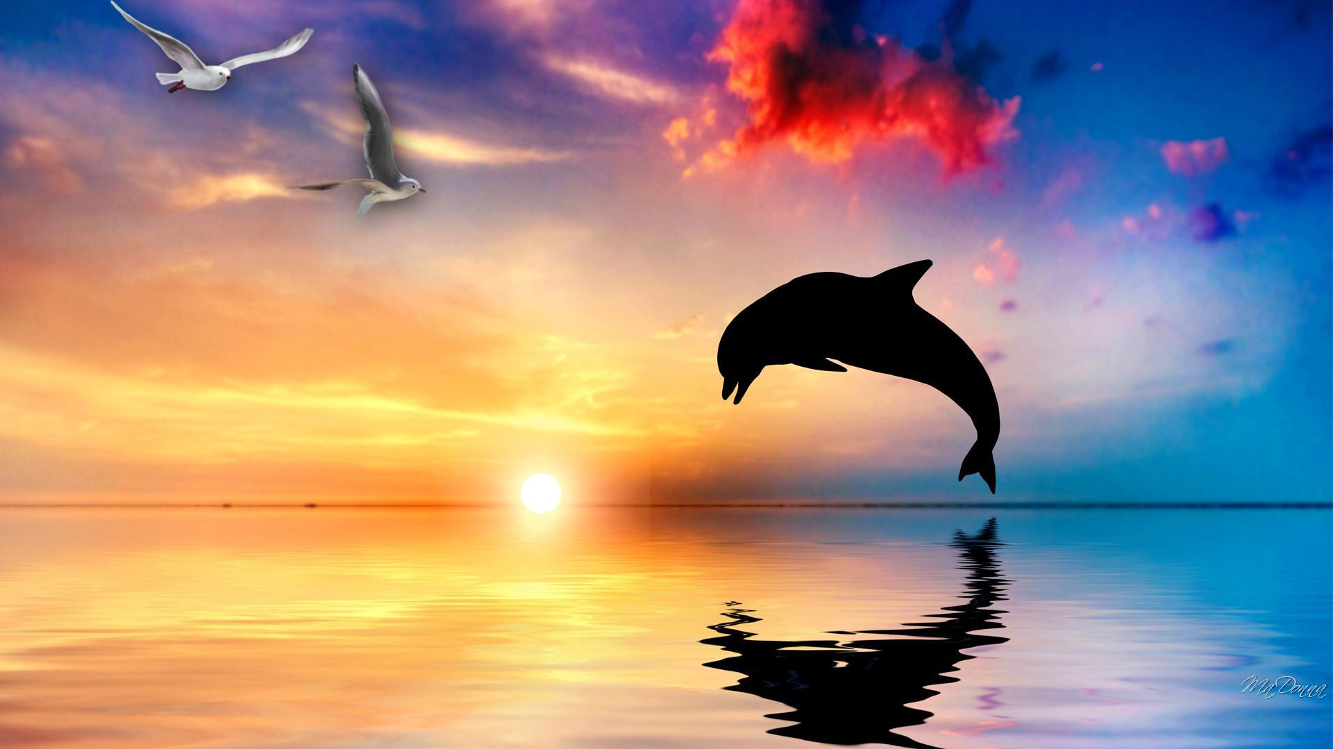 HD wallpapers pink dolphin iphone wallpaper