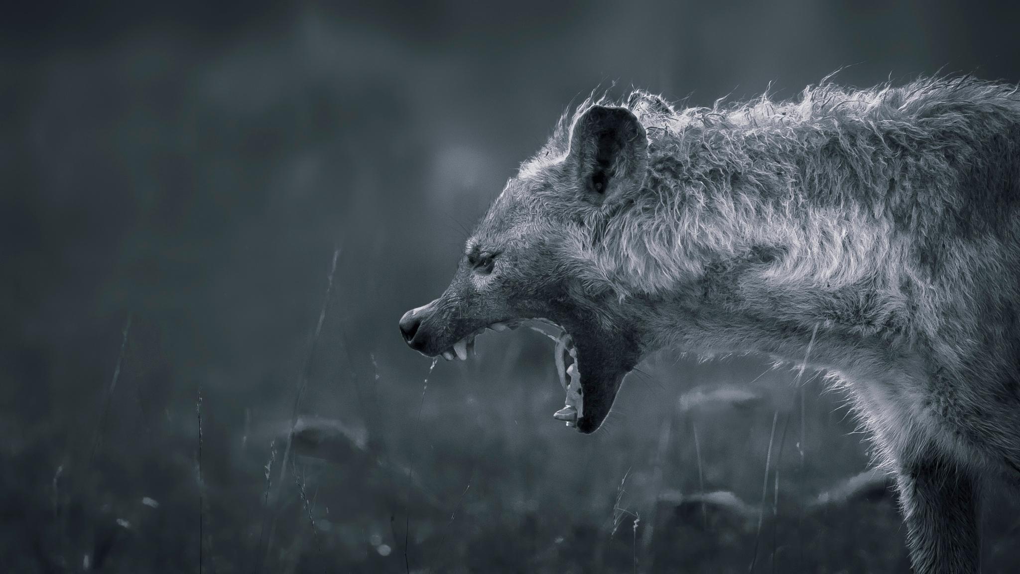 45 Hyena Background On Wallpapersafari