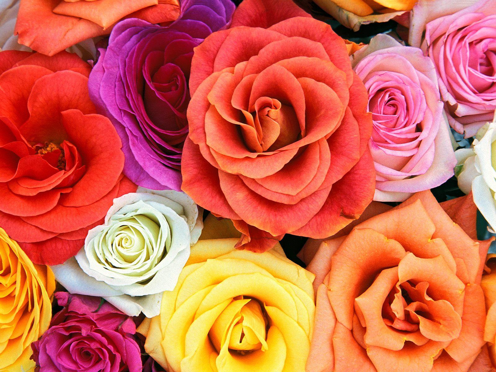 Wallpaper Flowers Wallpapers 1600x1200