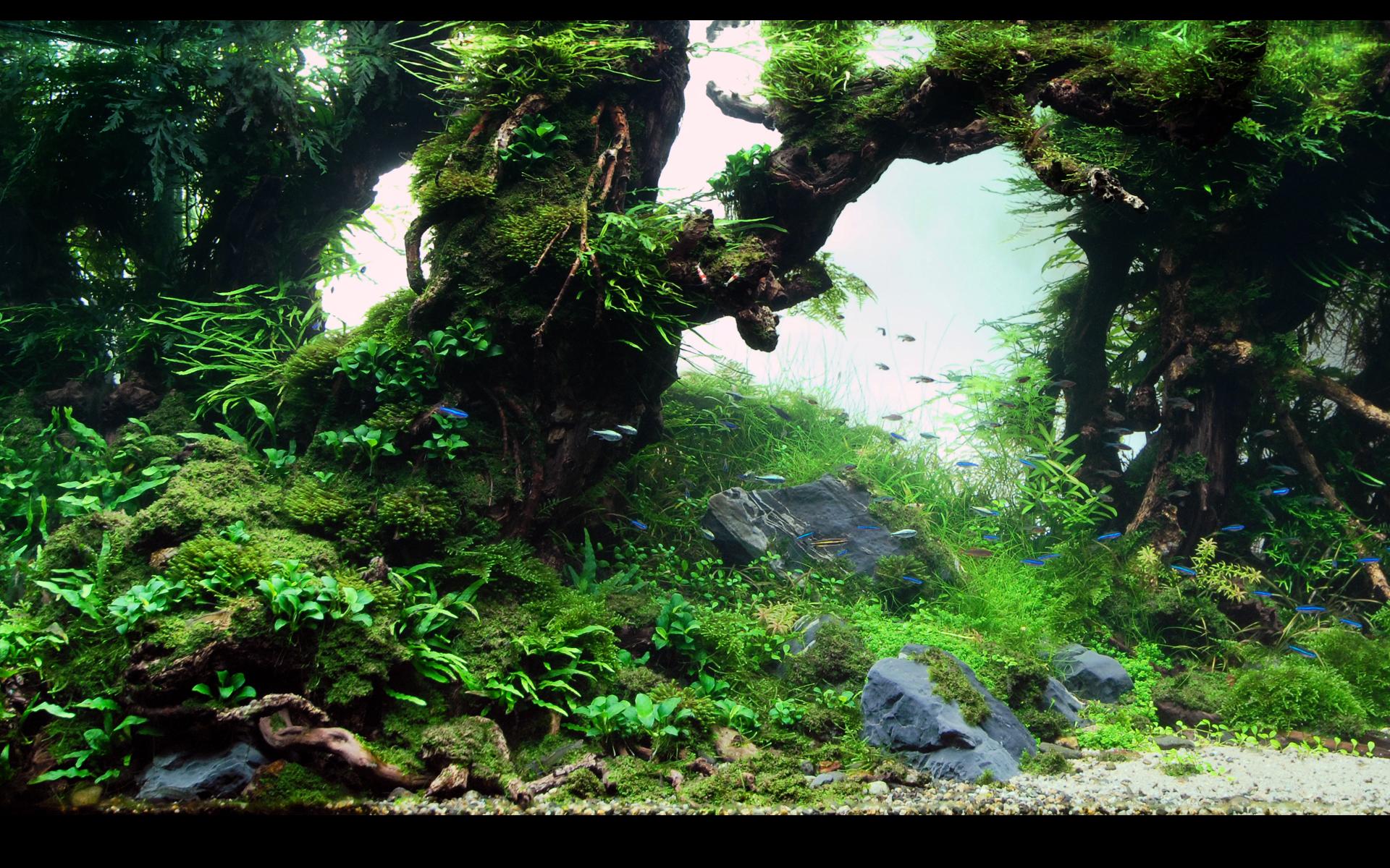 Fish in aquarium desktop wallpaper - Fish Aquarium Desktop Background