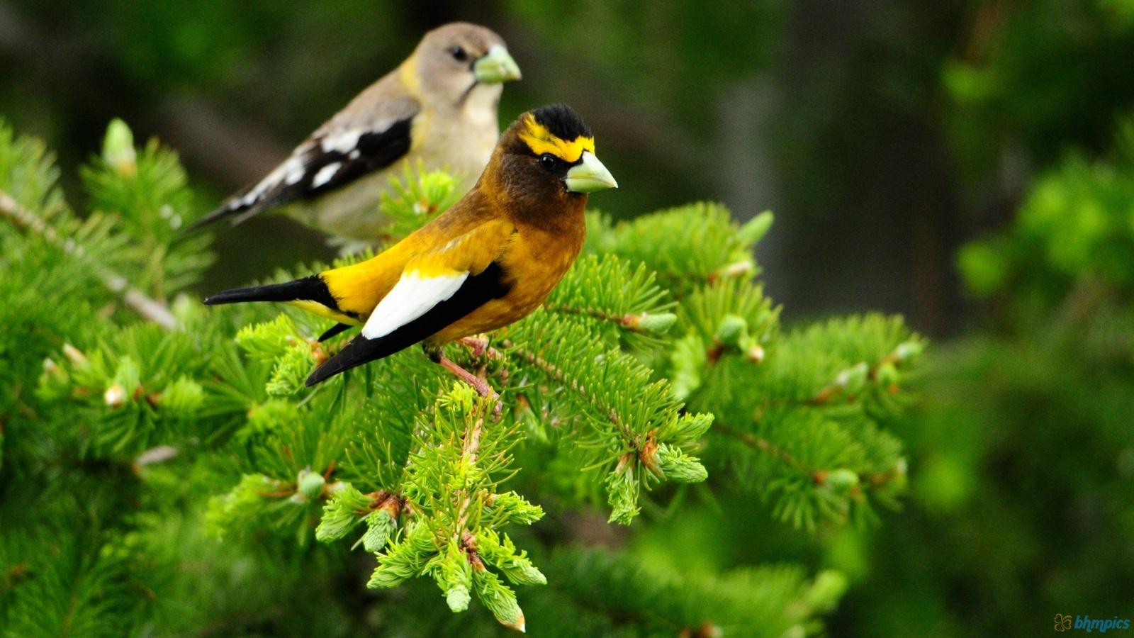 Bird On A Fence 1600x900 410 HD Wallpaper Res 1600x900 DesktopAS 1600x900