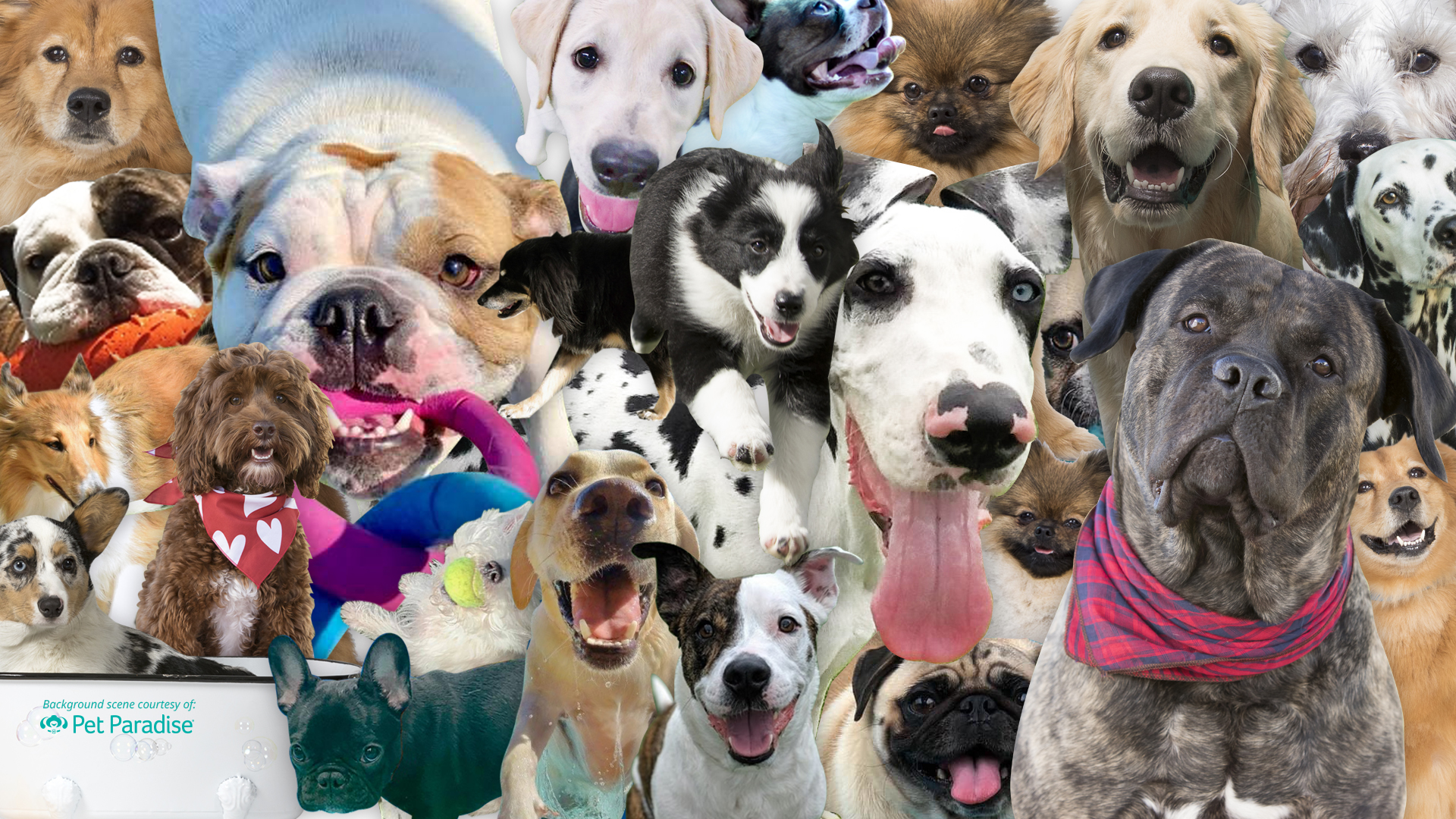 Dog and Cat Zoom Backgrounds Pet Paradise 1920x1080