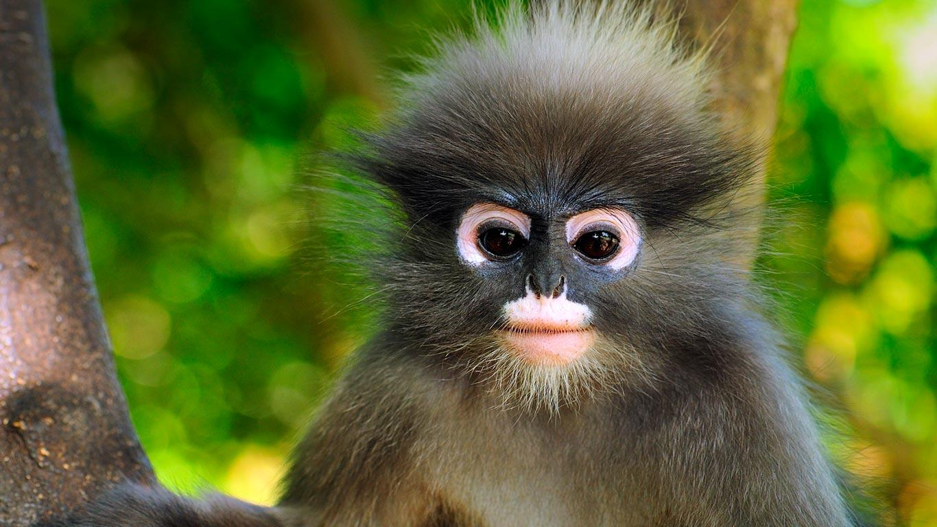 40 Bing Monkey Wallpapers   Download at WallpaperBro 1366x768