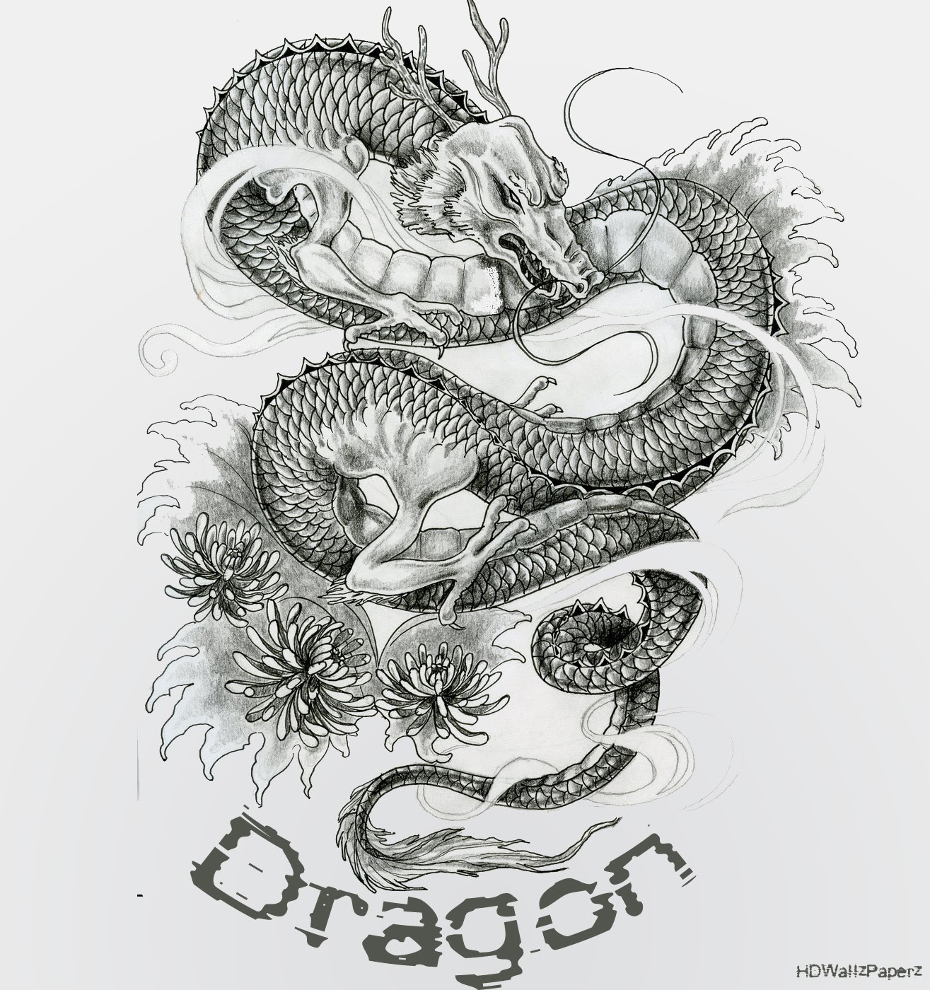 Hd wallpaper tattoo - Dragon Tattoo Hd Wallpaper Fire Dragon Hd Wallpaper White Dragon