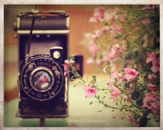 vintage wallie wallpaper cute flowers camera Vintage 550x439