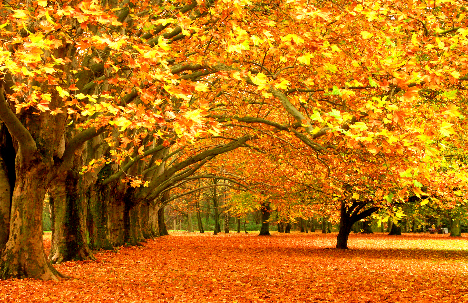 Beautiful Autumn Forest Wallpaper PC 6765 Wallpaper High Resolution 1920x1243