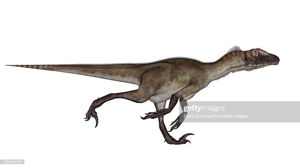 Utahraptor Dinosaur Running White Background stock illustration 1024x576