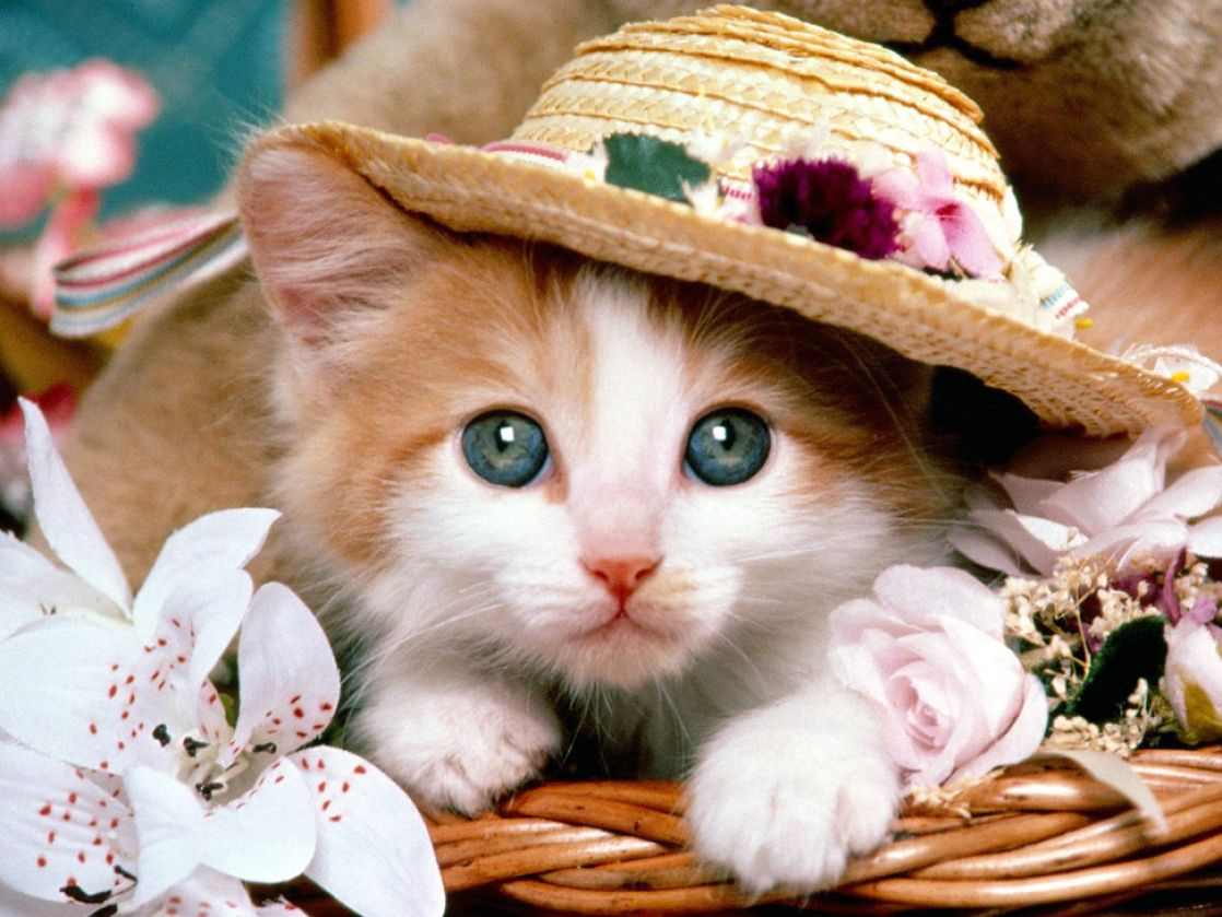 Cute baby kittens wallpaper pictures 2 1118x839