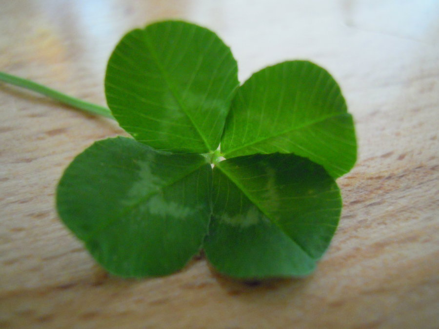 Four Leaf Clover Wallpaper Four leaf clover stock by 900x675