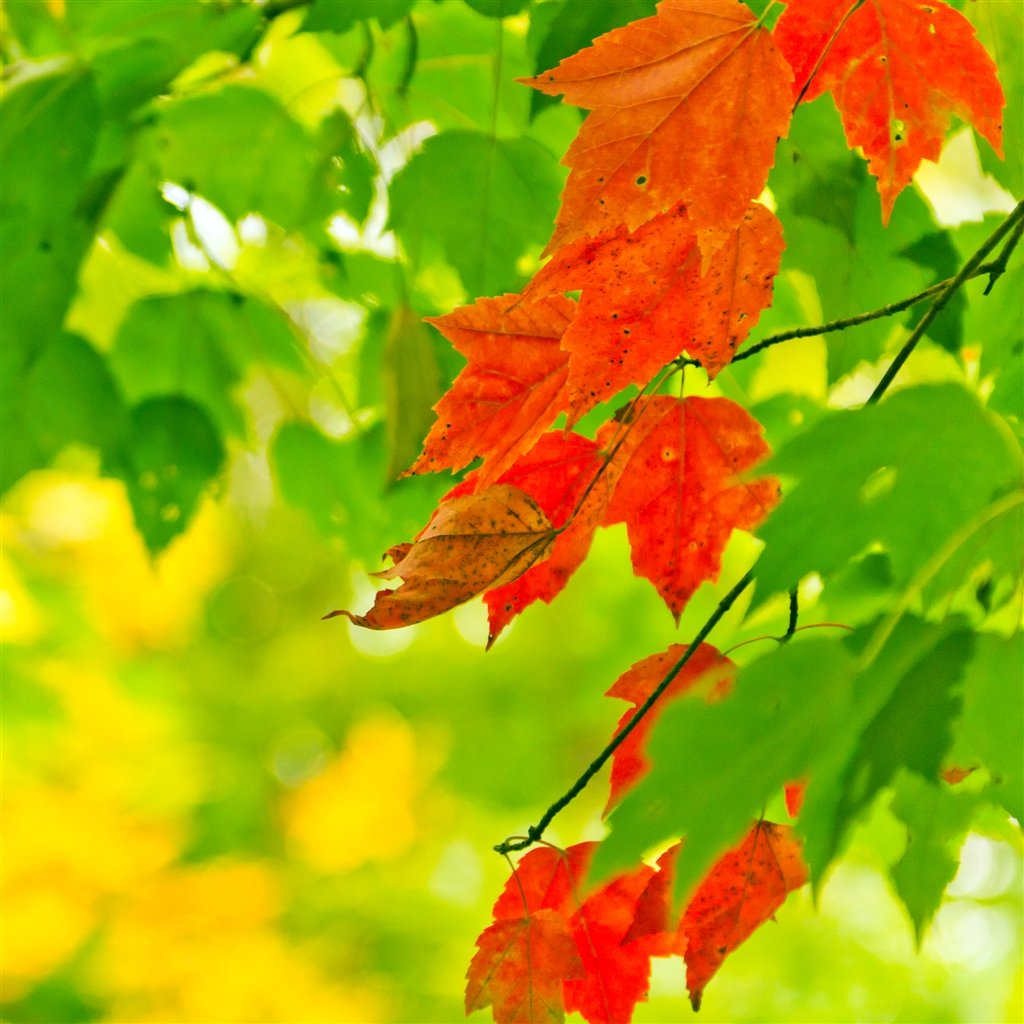 Autumn Bloom iPad Air Wallpaper Download iPhone Wallpapers iPad 1024x1024