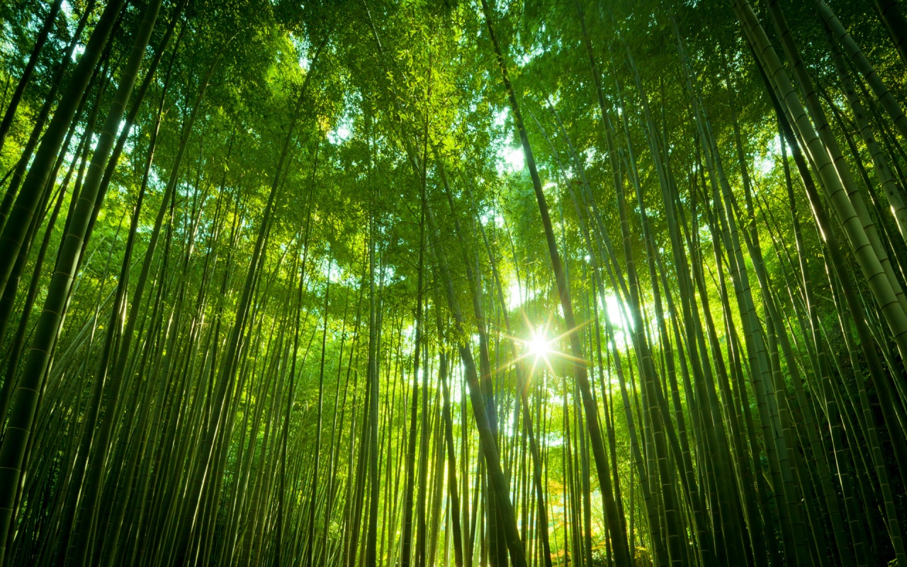 Japanese Bamboo Forest Wallpapers HD Wallpapers 1280x800