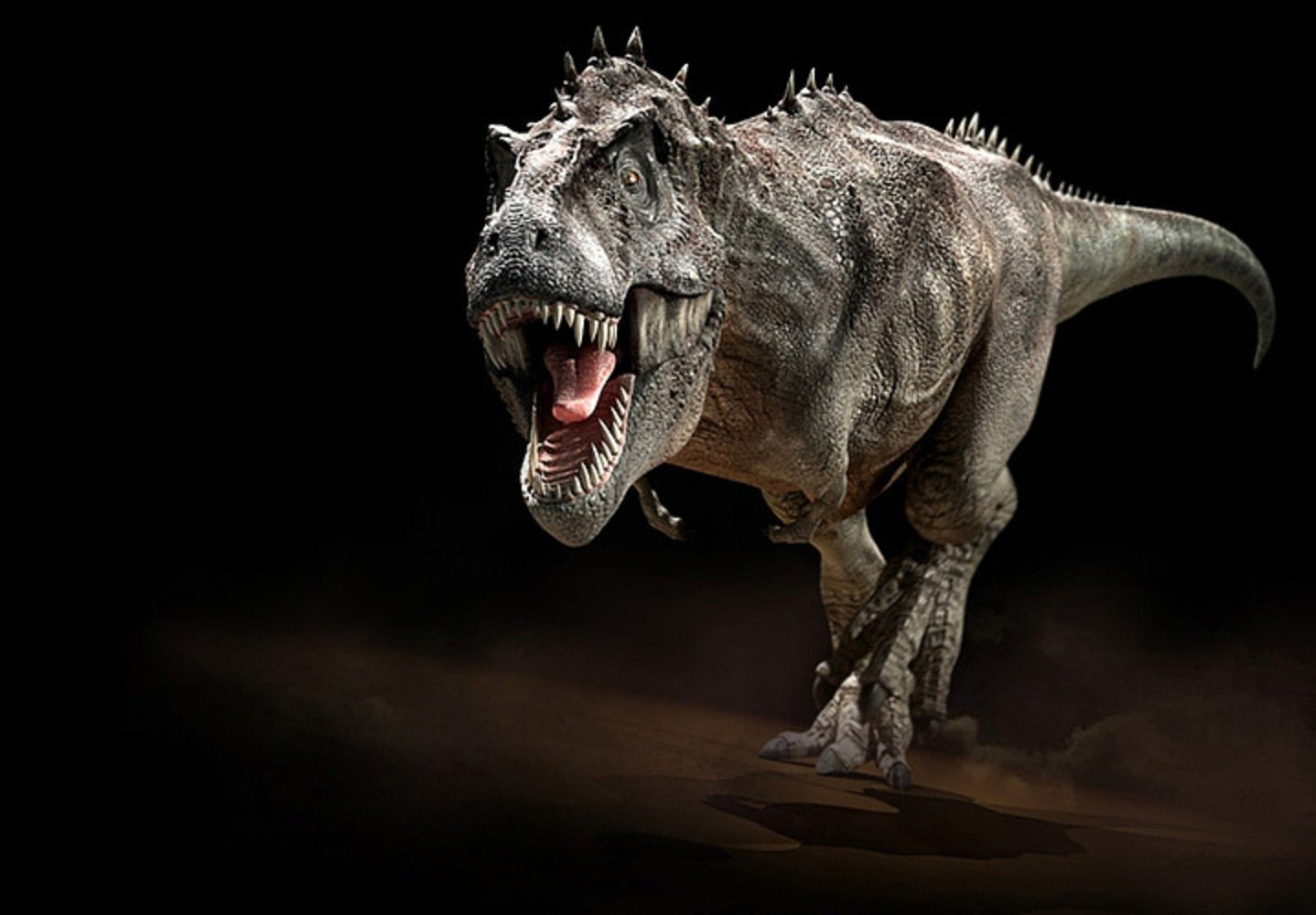 Tyrannosaurus rex wallpaper wallpapersafari for Tyranosaurus rex
